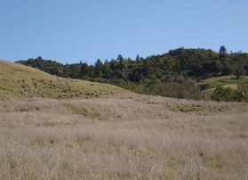 54-Acres-of-Developable-Land-in-Sonoma-County-02